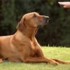 addestramento-DI-BASE-per-cani-fabriano