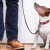 addestramento-DI-BASE-per-cani-fabriano1