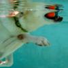 attività-in-piscina-per-cani-fabriano